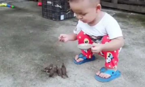 The Child Feed The Bird