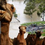Allah'ın spoası yok. Susuzluk korkusuyla develeri katleden Avustralya şimdi de sel ve sağanak yağışla boğuşuyor!